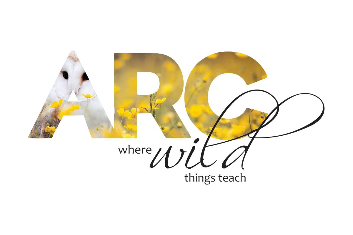 ARC Wild Returns November 12